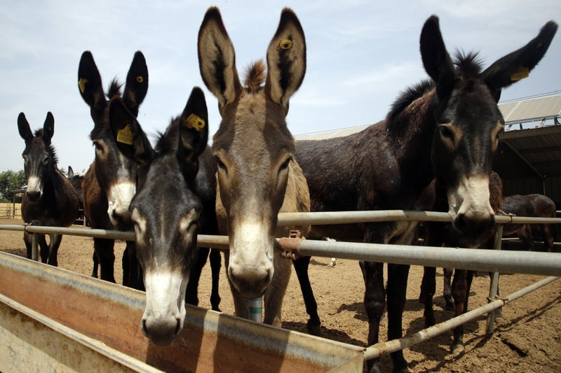 Man steals donkey from 'stingy', 'wealthy' brother