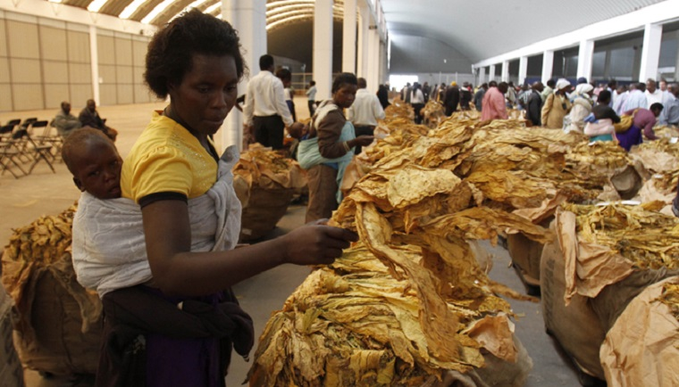 Tobacco selling season kicks off at a high of US$4.50 per kg