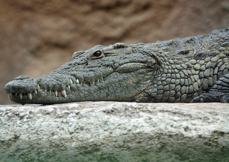 Rwandan man who breached coronavirus lockdown order eaten by crocodile