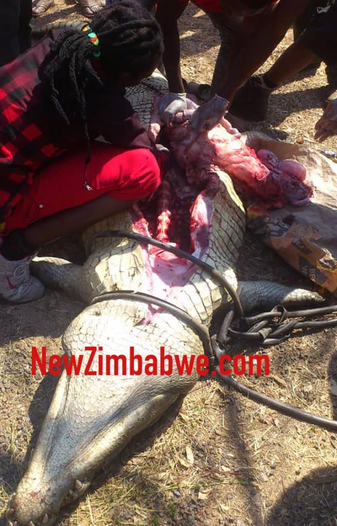 REDCLIFF: ZimParks rangers drag crocodile to funeral of teen it mauled to death; family retrieves body parts