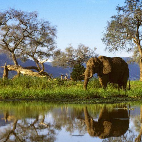 UK tour operator makes Zimbabwe return after 12 years; targets Mana Pools