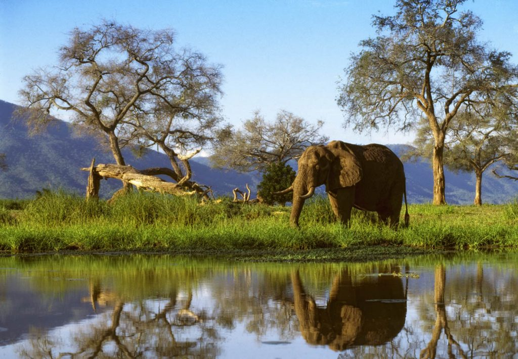 UK tour operator makes Zimbabwe return after 12 years; targets Mana Pools