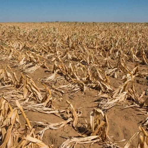 Zimbabwe 'slowly approaching man-made starvation'