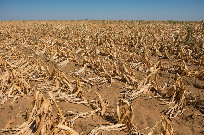 Worst-ever famine threatens Zimbabwe as economy collapses