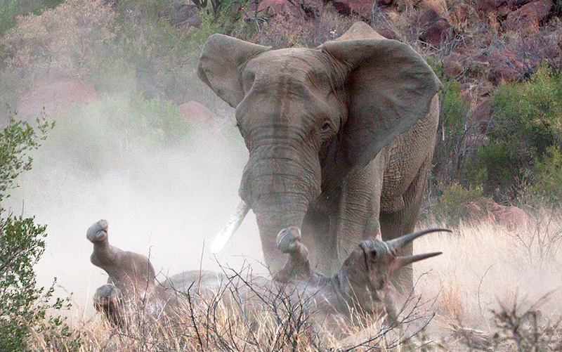 Govt puts Zimparks up for sale