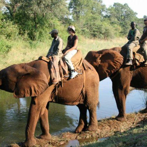 Shortages, price hikes choke tourism sector, says Hwingwiri