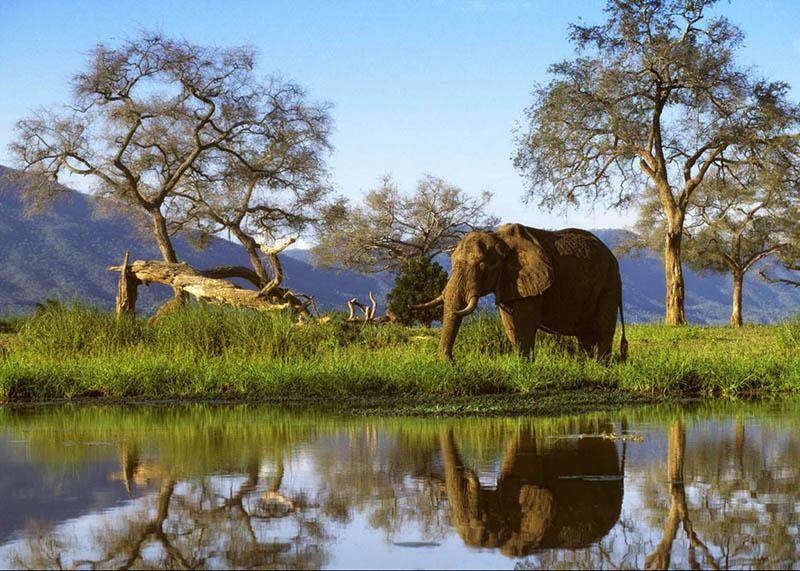 Zimbabwe among top eight safari destinations in Africa