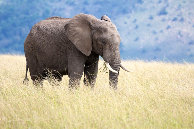 Africa wildlife films try to inspire amid poaching scourge