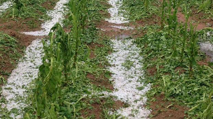 Homes, schools destroyed as hail storm wreaks havoc
