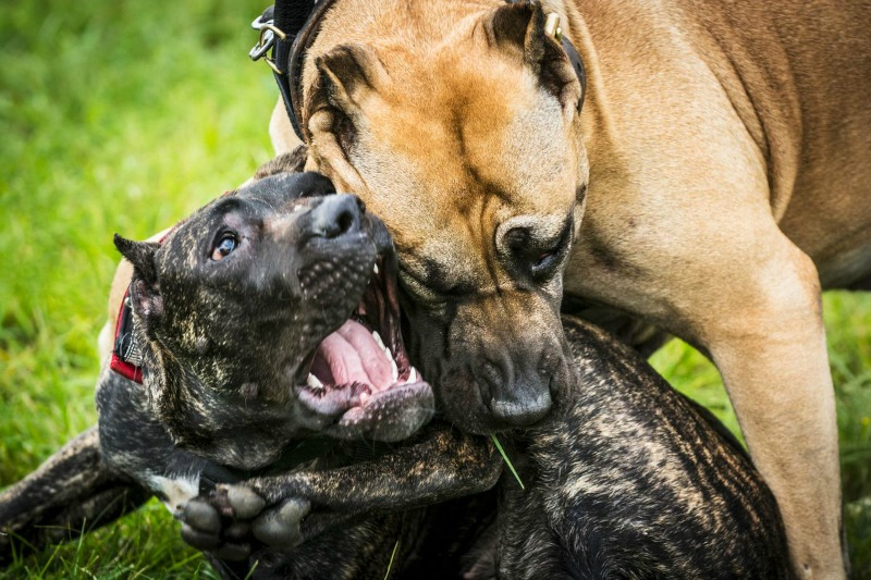 Ginimbi security sets dogs on neighbouring villagers