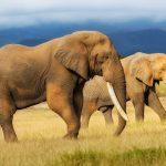 Elephants attack shrine, kill congregant during night prayers