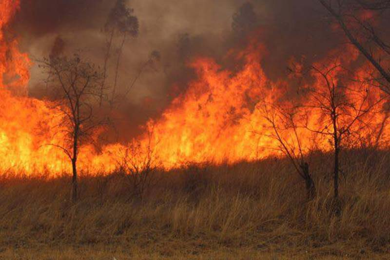 Manicaland: Veld fires destroy 10 000 ha timber in six months