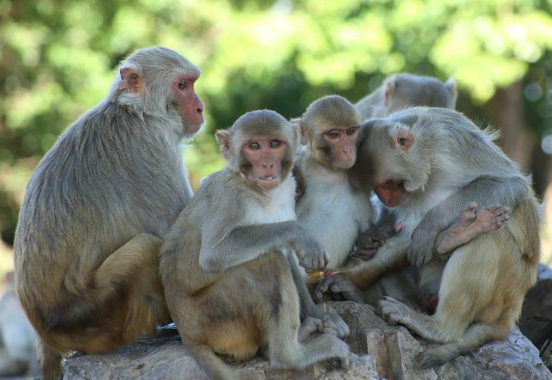 Monkeys take over hospital in South Africa's KwaZulu Natal