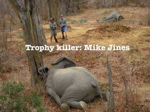 US hunter in trouble for killing two Zim elephants; claims self defence