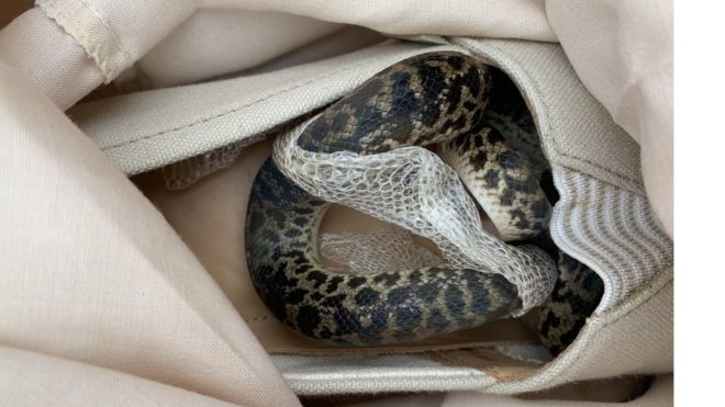 Scottish woman's shock at finding snake in suitcase from Australia