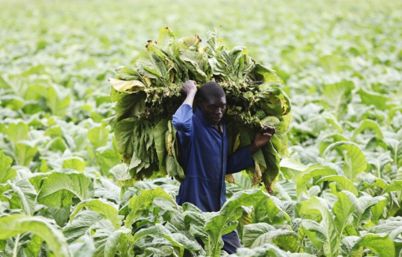 Agriculture sector awards workers 15 percent salary increase