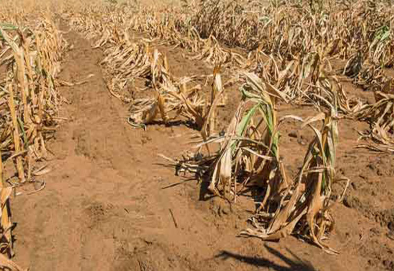 2 million on brink of starvation in regional drought in Zambia