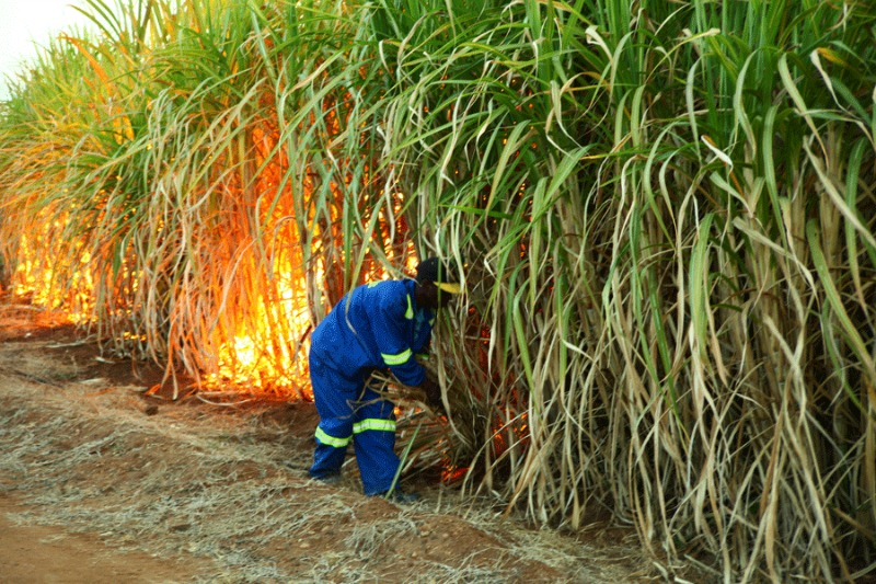 Zimbabwe sugar workers demand 100-percent increment