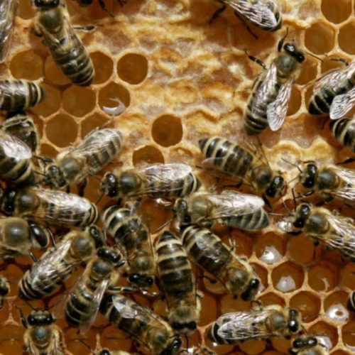 Apiculture farmers urged to target foreign markets