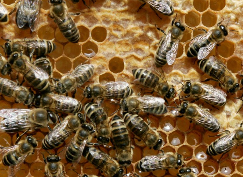 Bees sting 100 year-old man to death