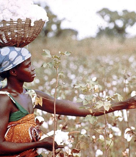 Cotton Output Increases By 39%