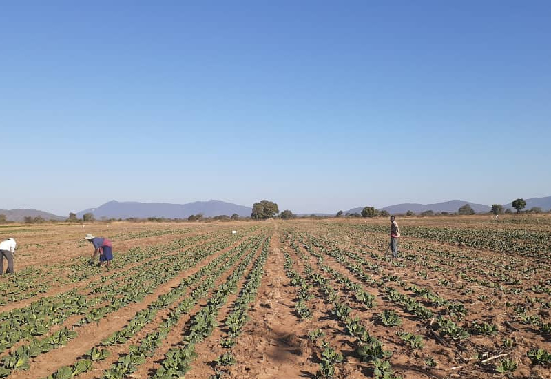 Union: Plight of farm workers under black employers worse
