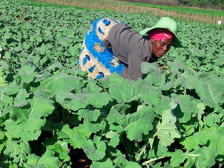 Home Gardens Bloom Under Lockdown In Zim's Townships