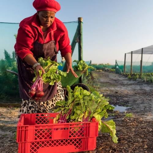 Innovative online grocery platform 10ngah.com transforms farming in Zimbabwe