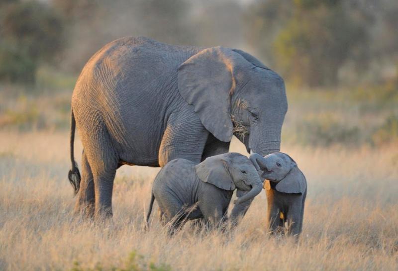 Botswana to start auctions of elephant hunting licences