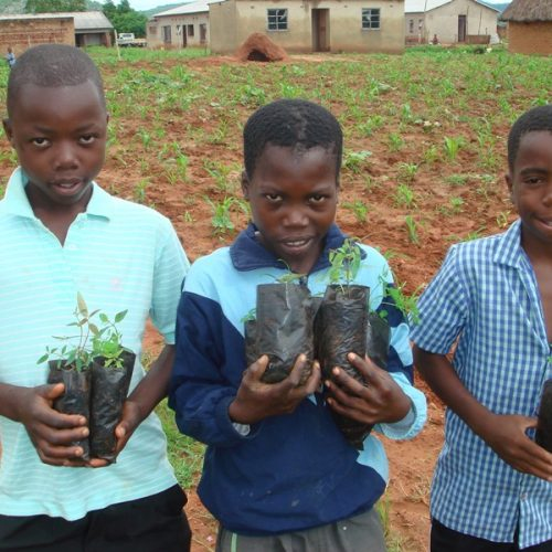 AWLO Zimbabwe in call for tree planting culture among citizens