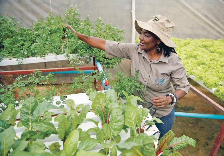 Hydroponic Farmer Defies Drought