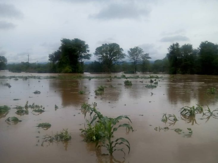 Binga Floods: Hundreds Perched In Trees Without Food