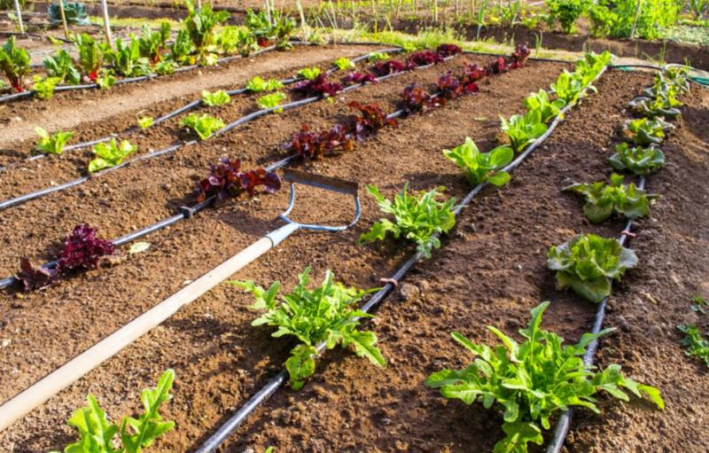 Zimbabwe surmounts climate change via smart agriculture