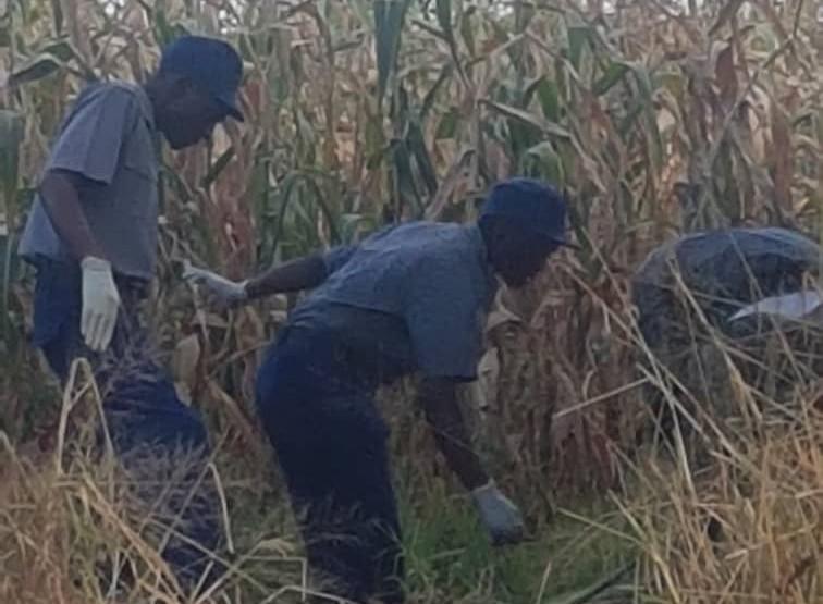 Newly Born Baby Boy Strangled, Dumped In Maize Field