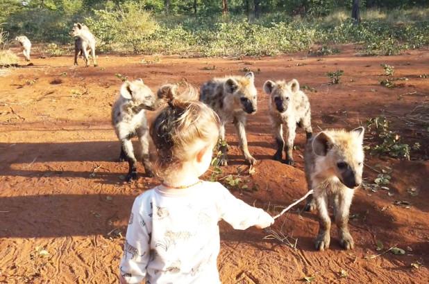 Toddler befriends pack of wild hyenas in Zimbabwe