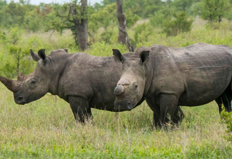 Spike In Wildlife Poaching As Poachers Take Advantage Of Lockdown Laxities