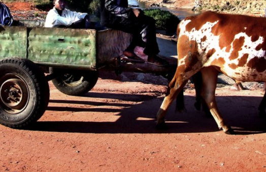 10 Year Binga Boy Dies After Ox-Drawn Cart Overturns