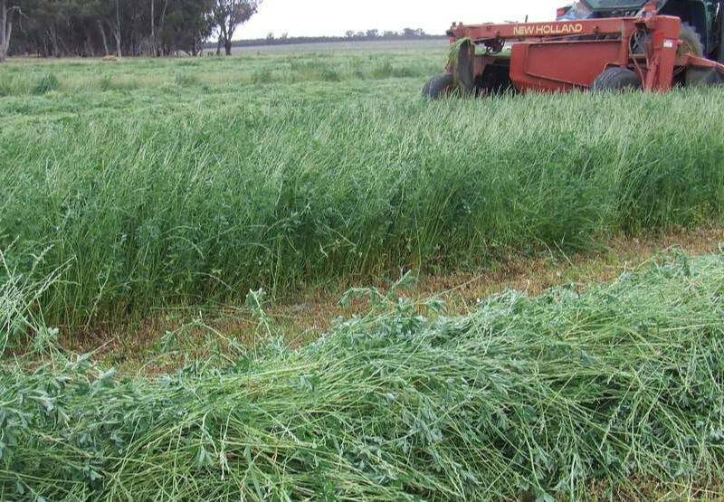 Over 1 000 Chiredzi Villagers Face Eviction To Pave Way For Lurcene Grass Farming