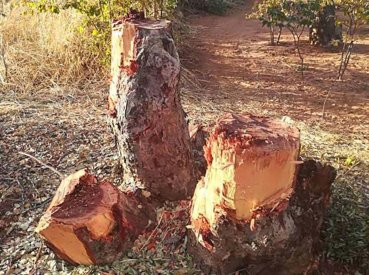 Vic Falls Residents Invade National Park For Firewood As Electricity Gets Costly