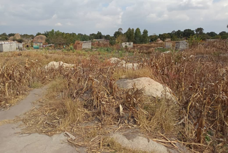 Politicians blamed for decimation of wetlands in Epworth