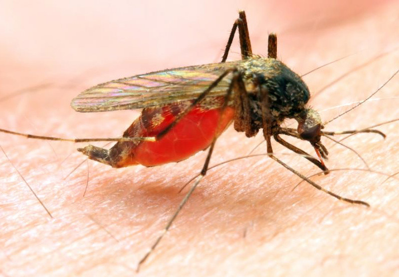 Malaria Claims 98 Lives In Manicaland In Six Months