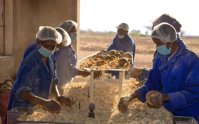 Zimbabwe-Based Entrepreneur To Create Global Market For Baobab Products