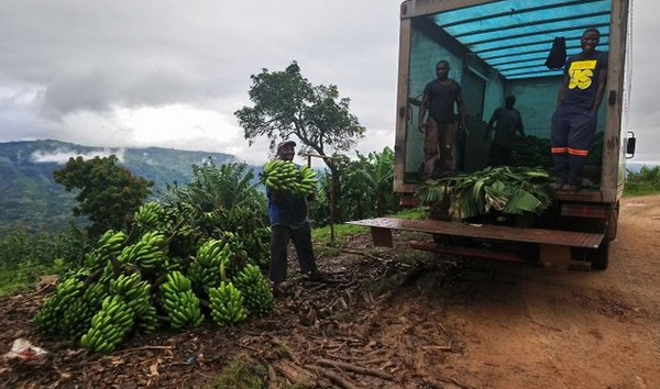 Lockdown blues for small scale farmers as transporters demand forex