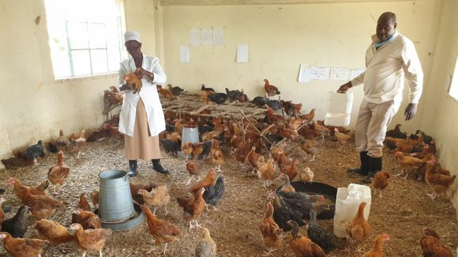 Covid-19 in Kenya: How It Turned Classrooms Into Chicken Coops