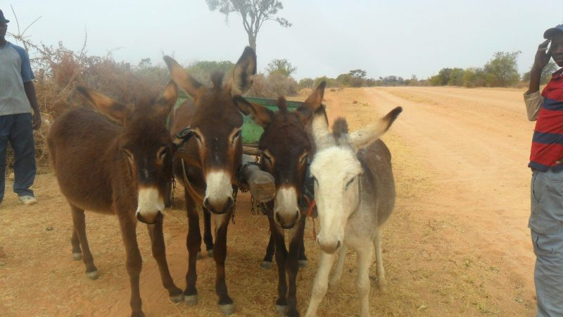 Donkey Cart Traders Invade Bulawayo Suburbs With Cheap Goods