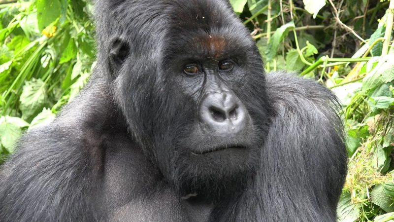 26 Congo Apes Recovered In Zimbabwe, 4 Men Arrested
