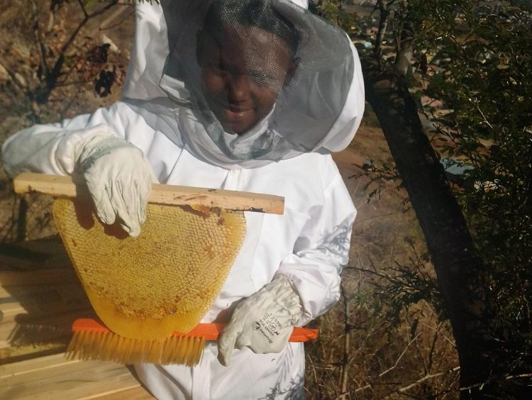 New Project Keeps Zimbabwe's Bees From Extinction