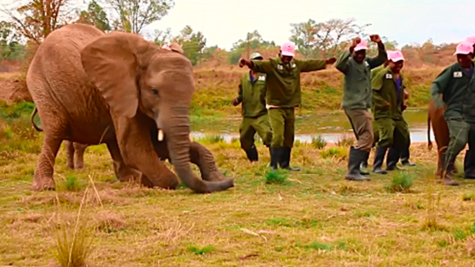 WATCH: Elephants, Giraffes In Harare Sanctuary Join 'Jerusalema' Challenge