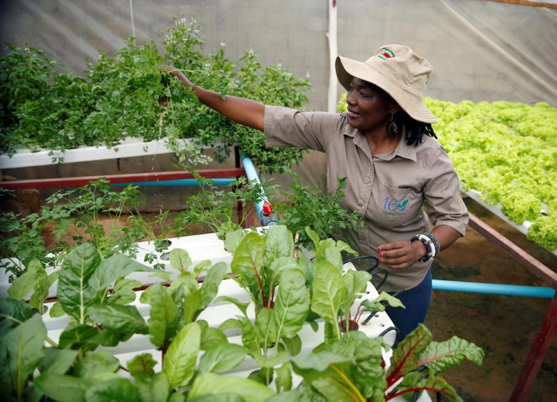 Hydroponic Farm Offers Solution To Chronic Water Challenges