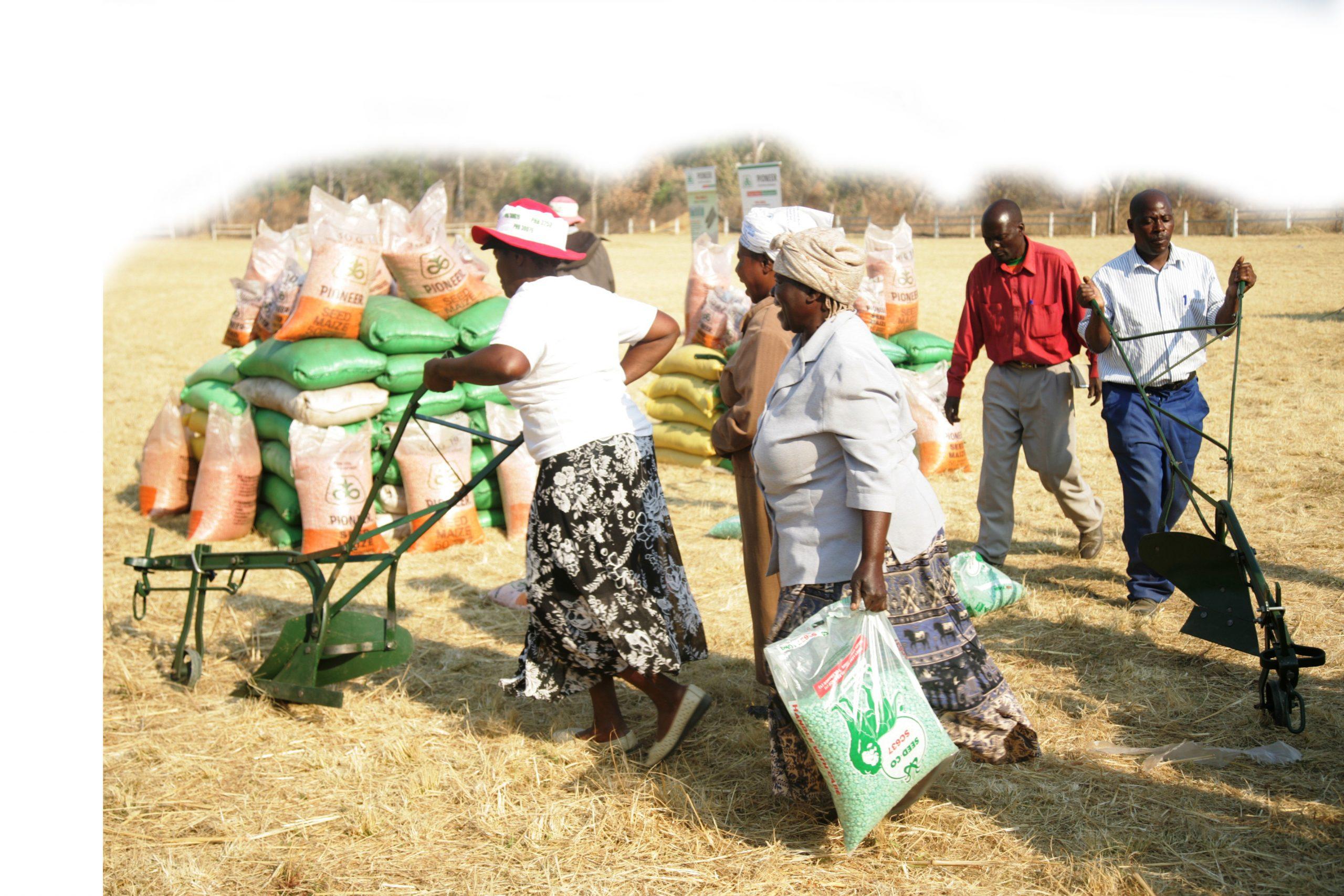 Government's Pfumvudza inputs find way onto black market